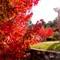 Autumn Color 2011