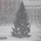 Snow Xmas tree