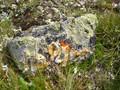 Weathered stone in Swiss mountain