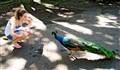 Girl and Peacock