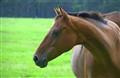 Horse mallacoota