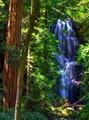 forest liquid