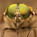 ol green eyes