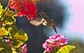Front Porch Hummingbird
