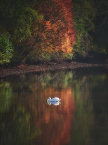 ReflectionsofAutumn