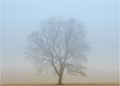 With some unusual heavy winter fog blanketing our region back in January I took the opportunity to get out and take some shots.  This large Maple tree standing alone in a local soccer field provided the perfect subject for the weather.    Normally a busy and not particularly interesting background would have been visible but with the heavy fog, all that is left was the silhouette of this magnificent tree, creating a misty minimalist image to capture.