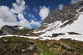 Alpine Summer Pasture