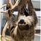 Sloth 02