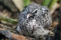 wet baby dove