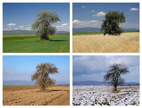 4-seasons-lr