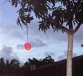 last mango in paradise