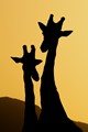 Tall silhouettes