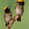 yellow hatsss