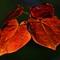 Backlit Orange