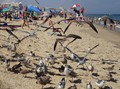 Photo of the seagulls, people, beach and ocean in Ocean City Maryland during a hot august day.  The seagulls were being fed by a nearby tourist.
