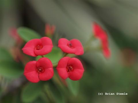 20120501-flowers