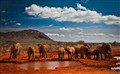 The red elephants of Tsavo
