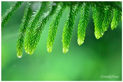 Green@Peace