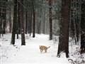 Chasing snowflakes at Morses Pond