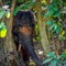 Elephant Borneo