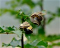 Snails In Nakusp BC