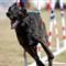 Incredible_Dog_20110402_110