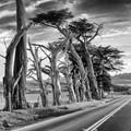 Cyprus Wind Break