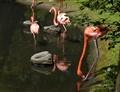 Pink Flamingo (2)