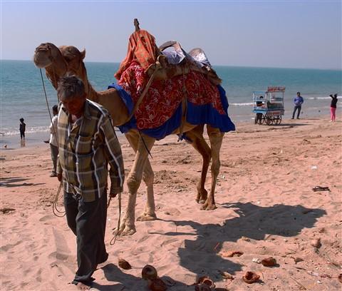 The Beach Camel