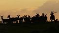 Calling the Herd