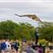 2011 Fall Raptor Release