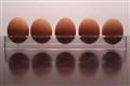 Egg Squad