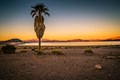 Lake Mead Palm