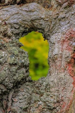 Tree Hole-3082