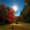 Autumn Flare