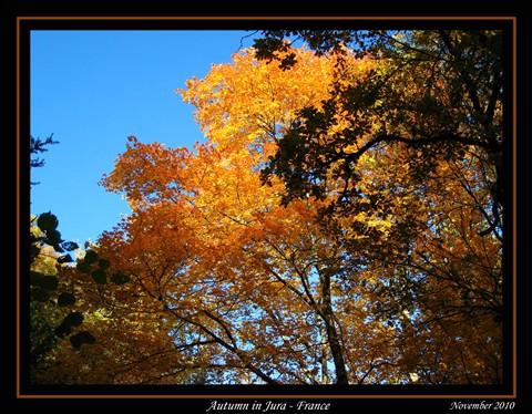 IMG_4834_automne copie