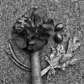 Camelias, haricots verts et  légumes