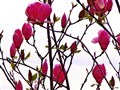 Hope, after winter spring comes always back...