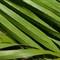 Zone8-leafpattern