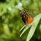 Wayne Butterfly 14-03
