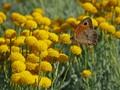 butterfly on y
