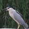 DSC00093 bird