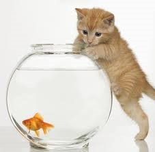 Cat Fish Photography