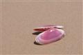 Boipeba shell