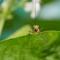 2014-04-18 Malaysia Kuala Lumpur Butterfly Park Grasshopper 10 Macro