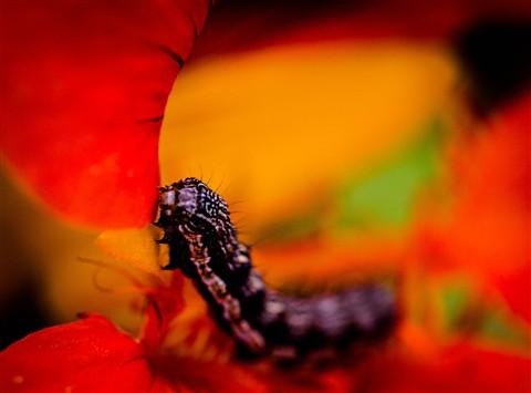 Caterpillar Dining