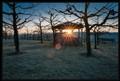 Sunrise in early Winter
