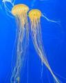 GA Aquarium 150404-026