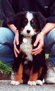 1990 - Otto pup