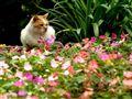 Garden Lover Cat